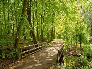 Zuid Holland Trouwen In Het Bos